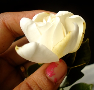 Carmen's hand holding one of the Gardenia flowers that were surrendered to the ocean along with my Tita Carmen's ashes.