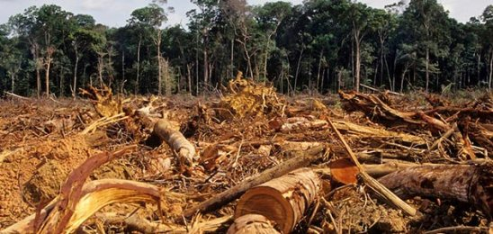 Amazon-Deforestation (1)