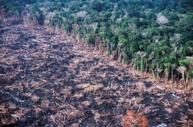 amazon-deforestation