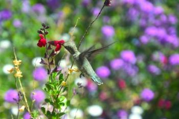 hummingbird5