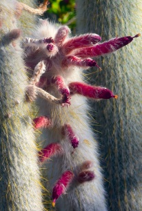saguaro24