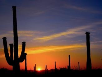 saguaro28