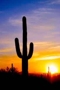 saguaro33