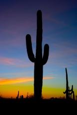 saguaro34
